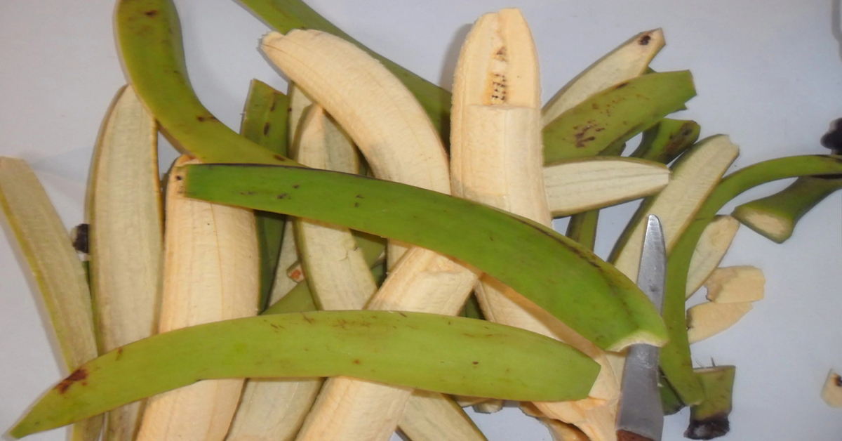 Use Unripe Plantain Peels without Compromising Economic Gain in Rabbit Production